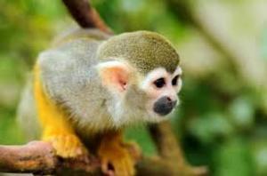 Venta De Monos Changos En Monterrey Monterrey Ciudad Anuncios