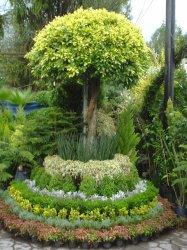 Asociacion de jardineros de xochimilco m xico df for Jardineros en xochimilco
